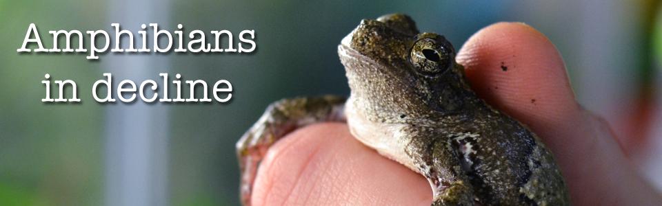 amphibians feature image